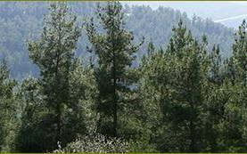 """גנבת שטחי טבע ויערות מהציבור. געגועים לקק""""ל"""
