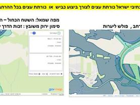 נתיבי ישראל- איך  מנדט לביצוע כביש הופך למנדט נרחב לכריתת עצים ?