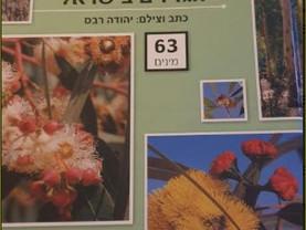 """מדריך האקליפטוסים הגדלים בישראל ד""""ר רבס יהודה. 2008"""