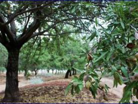 התנגדות הציבור לפטור מרישיון כריתה לעצי מטע. (צו יערות השר פורר 2.9.2021)