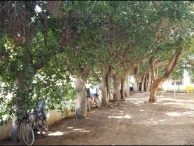 חשיבותם של העצים