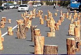 איתור רישיונות כריתת עצים