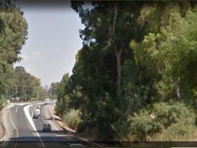 קובץ תמונות  כביש 65 נתיבי ישראל דברת גולני -1600 אקליפטוסים ניכרתו