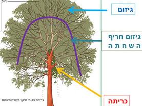 מידע חשוב על הגנת העצים