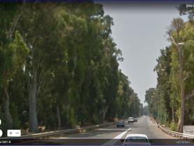 נתיבי ישראל- כריתת השדרות ההיסטוריות כביש 8510. טו בשבט 2021- היה חוק ואיננו.