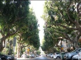 עצים כמפחיתי זיהום אוויר בערים.