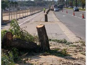 כריתת עצים רחוב שיטרית