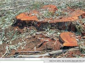 הודעה דחופה-וועדת שרים לחקיקה 11.7.21 הצעת חוק מבטלת סעיף 83ג(ג) הגנת עצים בוגרים בתשתיות ובניה