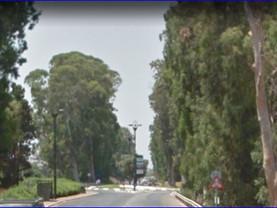 ערר -נתיבי ישראל כביש 8510 -בוסתן הגליל- שדרת עצי ענק    24.6.2021