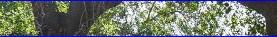 תמא 1-מינהל-התכנון ביטל את נהלי החוק להגנת העצים וצמצם סמכויות שר החקלאות