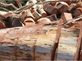 ההונאה לביטול ומחיקת הגנת העצים הקבועה בחוק, מתבצעת מנובמבר 2018