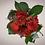 Thumbnail: Petite Boîte à Chapeaux San Valentino Ed.