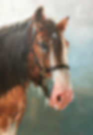 heavy horse.JPG