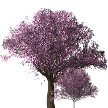 cherry-blossom-tree-1585230_1920.png