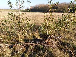 woodland planting.jpg