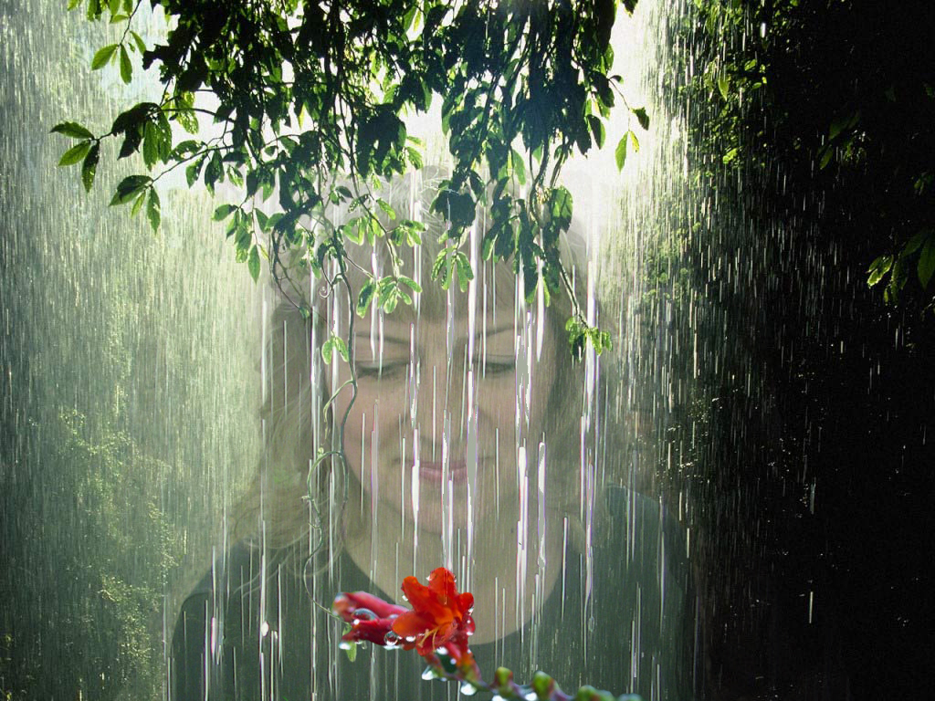 Rain_Forest_Tropic copy.jpg