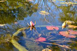Botanic Garden 047.JPG