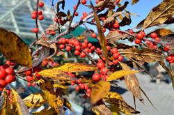 Botanic Garden 136.JPG