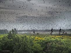 Bat Migration 5.jpg