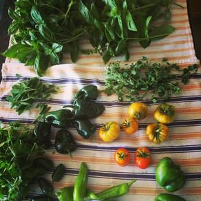 How To:  Start Planning Your Garden