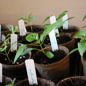Steps to Starting Your Garden