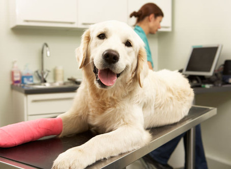 Pets in Surgery