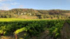 Vignes-LaPercheGrenache18Sep.jpg