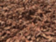 Small Bark.jpg