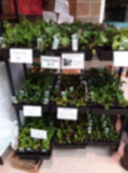bedding plants (2).jpg