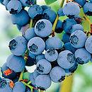 Blueberry Razz.jpg
