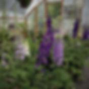 Delph Magic Fountain.jpg