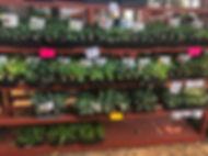 bedding plants my booth.jpg