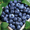 Blueray Blueberry.jpg