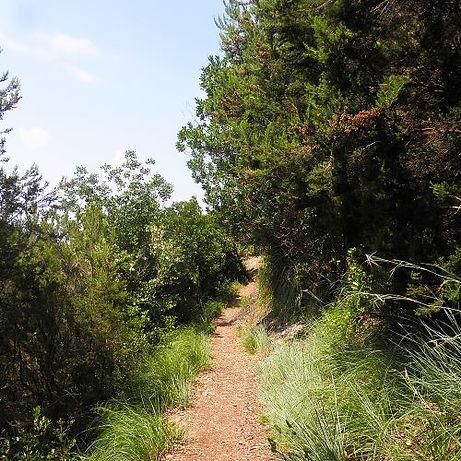 sentiero nella macchia mediterranea 1  B