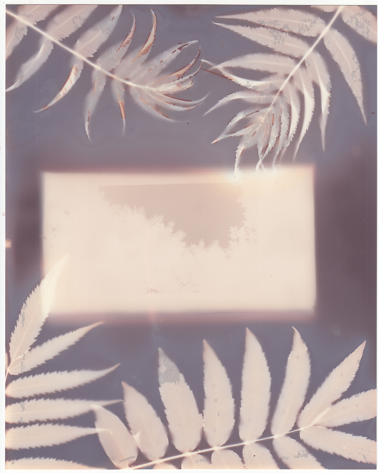 Bellows photogram