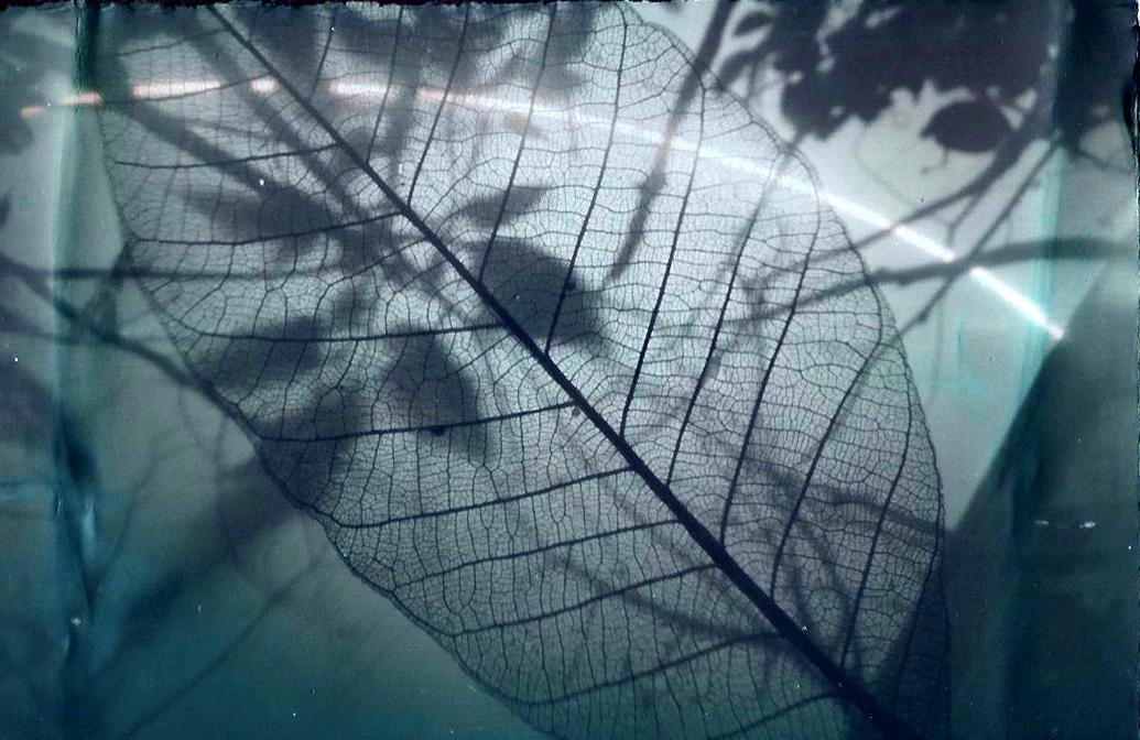 Leaf skel 2