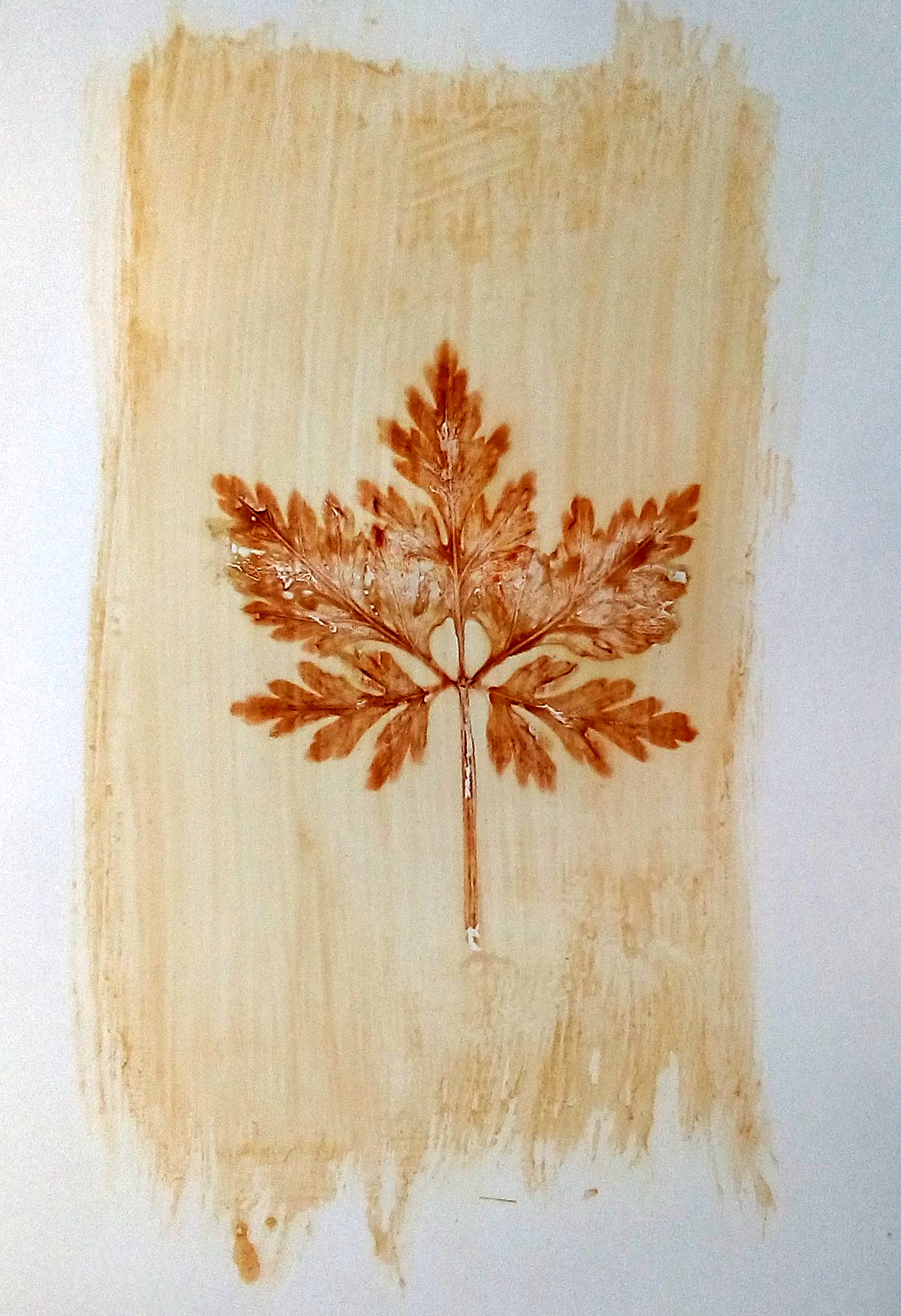 Justin Quinnell leaf
