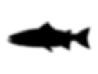 atlantic-salmon-silhouette-vector-illust