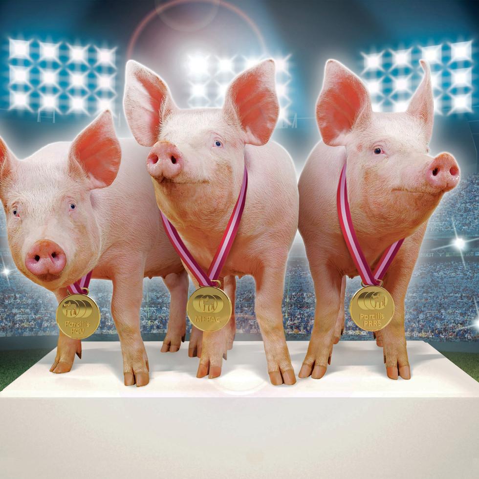 Pigs, Michael Prior Studio, Photography, Brackley