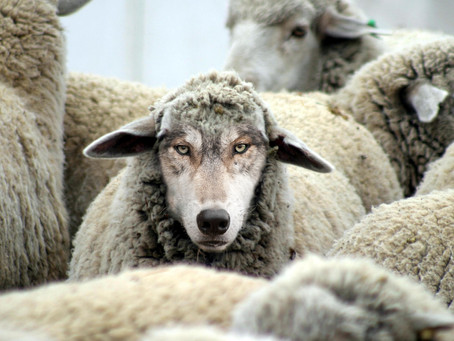 The Lithuanian Wolf Dressed in Sheep's Clothing