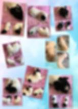 106635887_1665126903653764_7101240075293