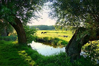 landscape-water-meadow-green-141978.jpg