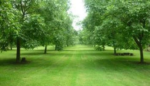 agroforestry foto2.jpg