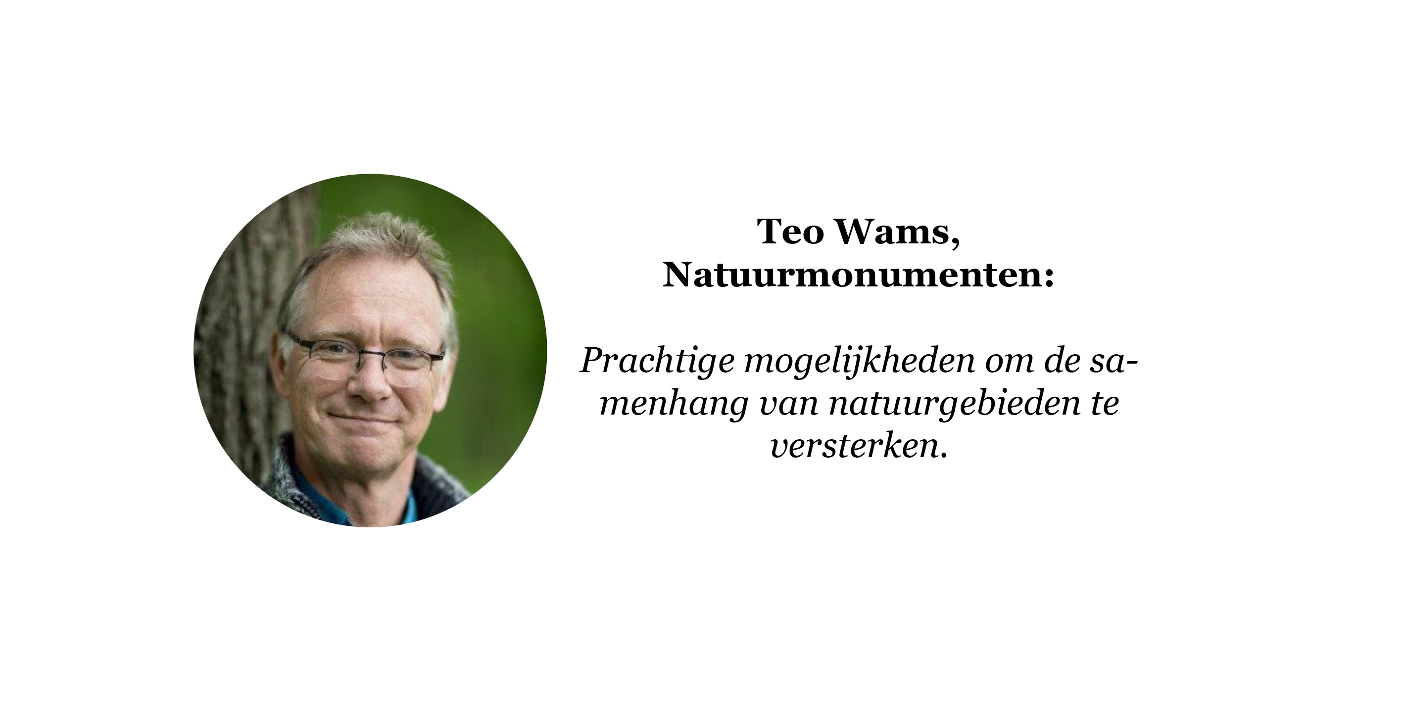 Quote Teo Wams