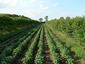 agroforestry foto1.jpg