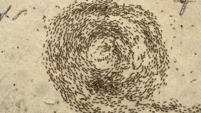 Spiral of Ants by Lemon Demon