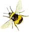 Bee Logo.bmp