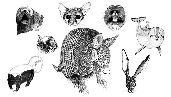 A sample of Terry Maxwells Art