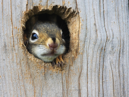 Squirrel-Net will be at #ASM2021!