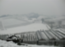 Виноградники Барбареско зимой